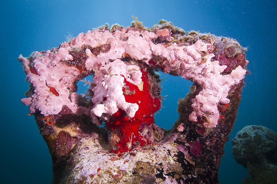Silent Evolution_Mexico_coral_pink_03_Jason deCaires Taylor_Sculpture