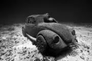 Anthropocene_Mexico_growth_b&w_Jason deCaires Taylor_Sculpture
