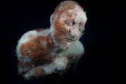 Museo Atlantico_Lanzarote_growth_night_03309_Jason deCaires Taylor_Sculpture