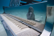 Piano_Bahamas_clean_reflection_Jason deCaires Taylor_Sculpture