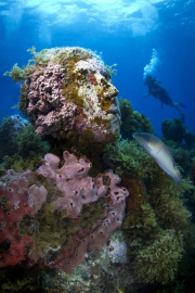 Silent Evolution_Mexico_coral_diver_Jason deCaires Taylor_Sculpture