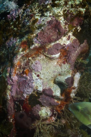 Silent Evolution_Mexico_coral_face_Jason deCaires Taylor_Sculpture