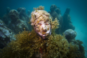 Silent Evolution_Mexico_growth_algae_Jason deCaires Taylor_Sculpture
