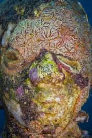 Vicissitudes_Grenada_coral_sponge_Jason deCaires Taylor_Sculpture