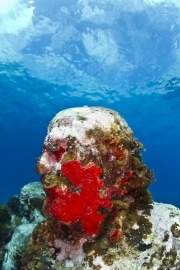 Silent Evolution_Mexico_coral_red_Jason deCaires Taylor_Sculpture