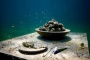 The Last Supper_Mexico_growth_apples_Jason deCaires Taylor_Sculpture